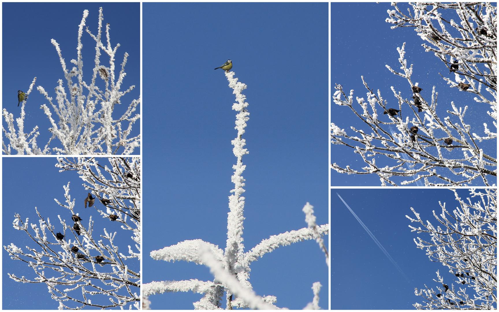 bleu , bleu ... le ciel de l'hiver ...blanc ...blanc... etc ...