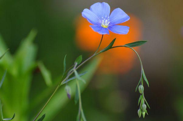 Bleu-doux