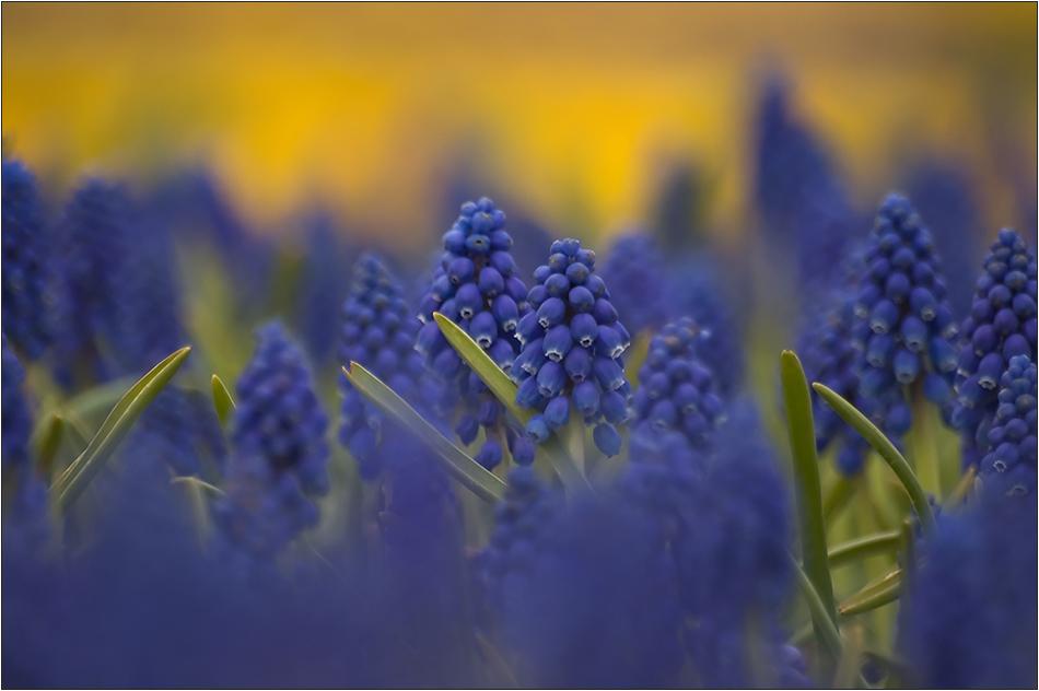 Bleu et ambre