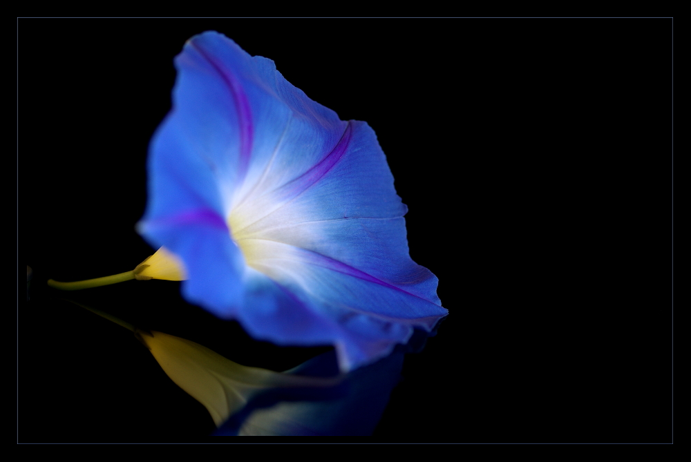... bleu lumineux ...