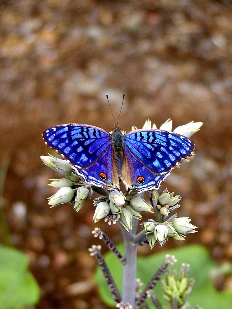 bleu métal