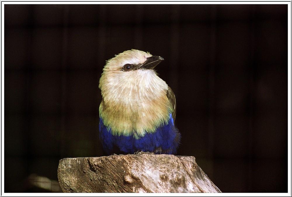 Bleu oiseau
