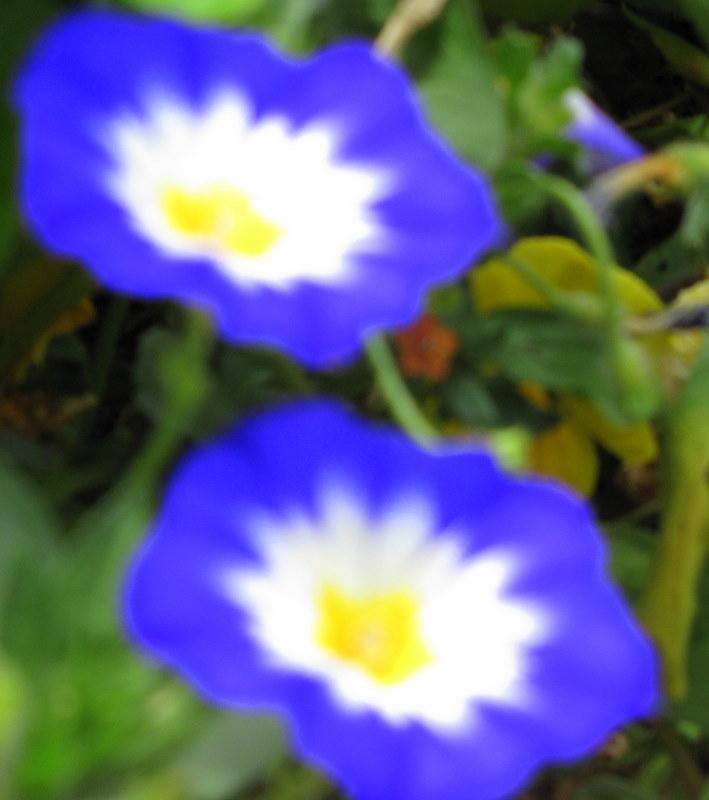 Bleu...... royal