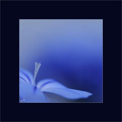Bleublueblau