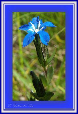 Bleue...bleue....2012