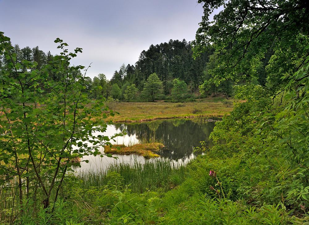 Blick auf das Moorfeld vom Nonnenmattweier Nr.4