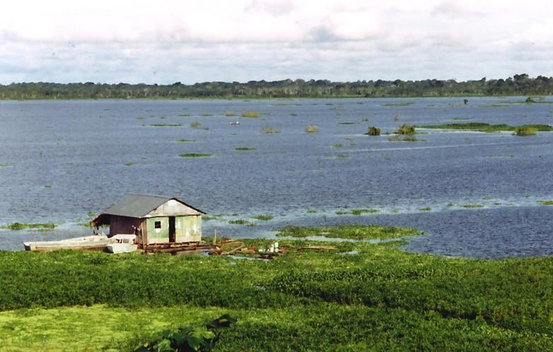 Blick auf den Amazonas (Iquitos, Peru)