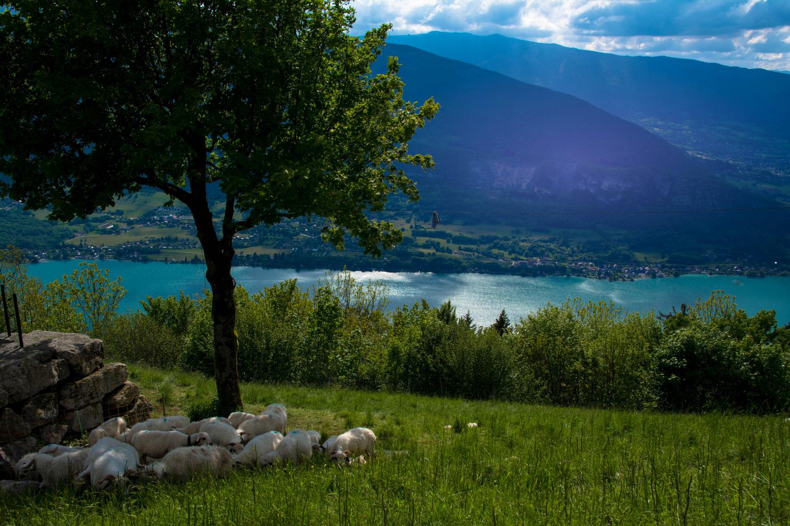 Blick auf den Lac d'Annecy