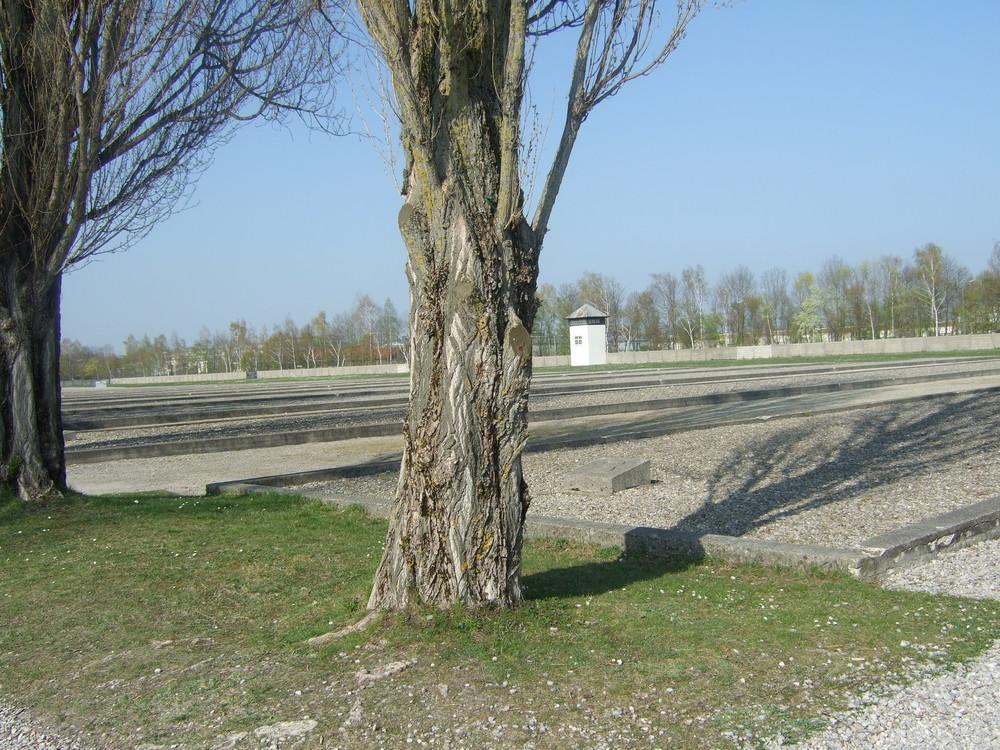 Blick auf ehemalige Baracken im KZ Dachau