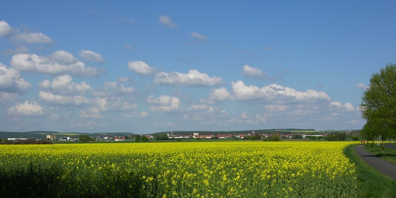 Blick auf Gochsheim aus Richtung Schwebheim mit Raps