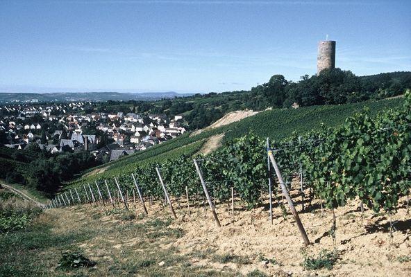 Blick auf Kiedrich und Ruine Scharfenstein