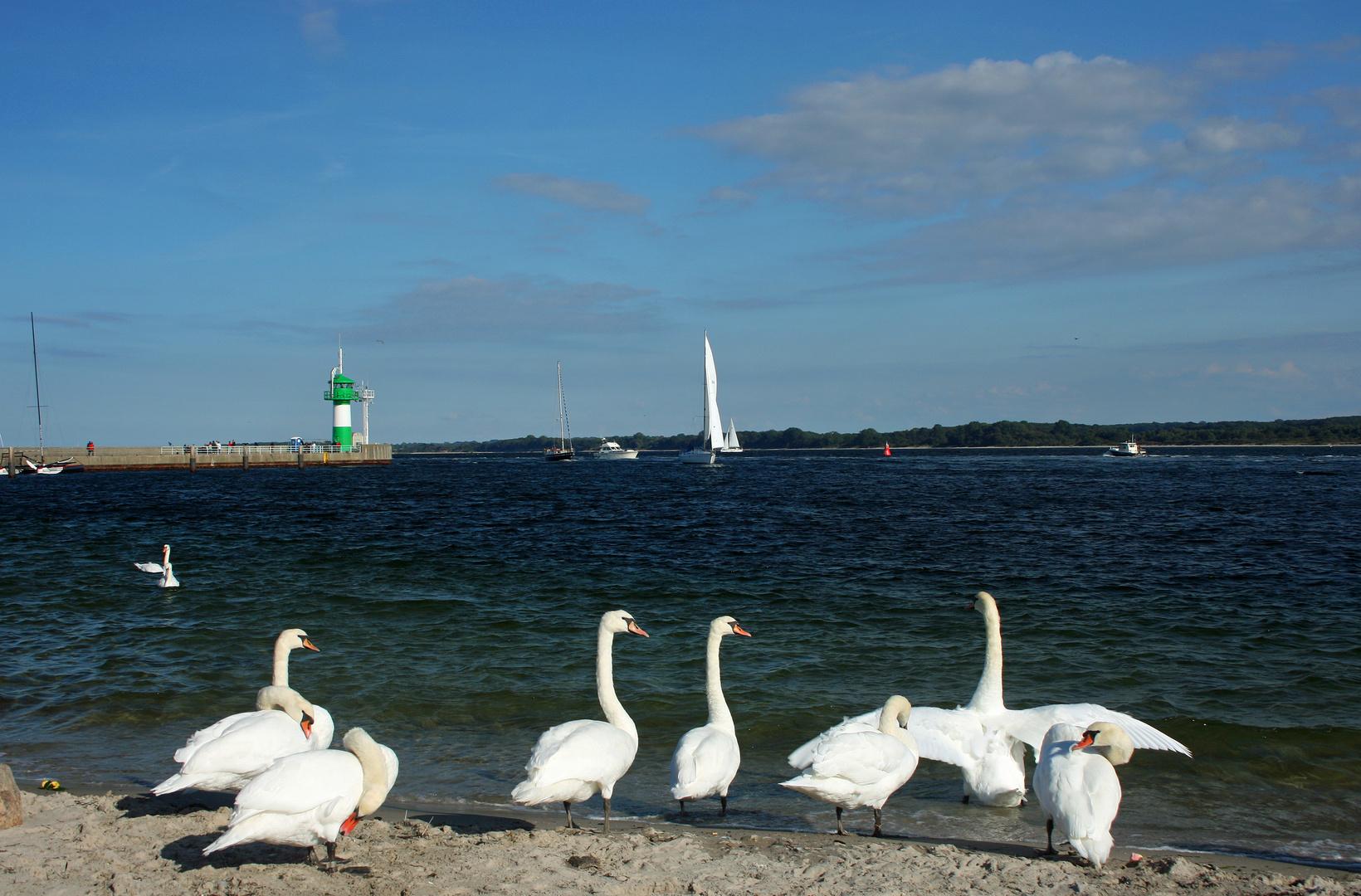 Blick auf´s Meer (Travemünde)