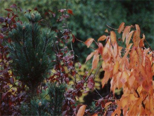 Blick aus dem Büro - Herbst 2000