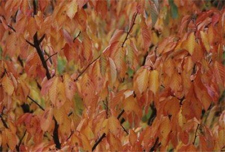 Blick aus dem Büro - Herbst 2000 Teil 2