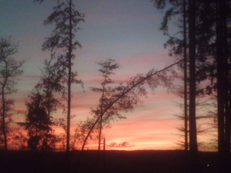 Blick aus dem Waldhinaus bei Sonnenuntergang...