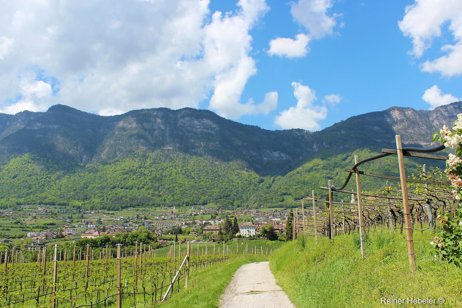 Blick aus den Weinbergen auf Kaltern und den Mendelpass