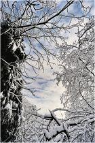 Blick durch das Schneegestrüpp