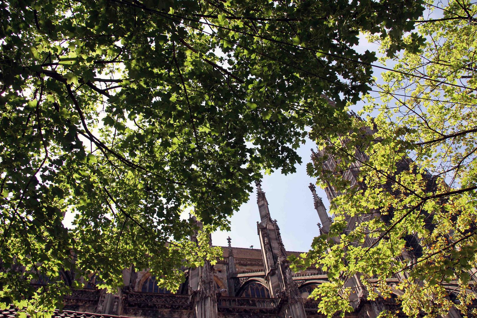 Blick durch die Bäume zum Ulmer Münster