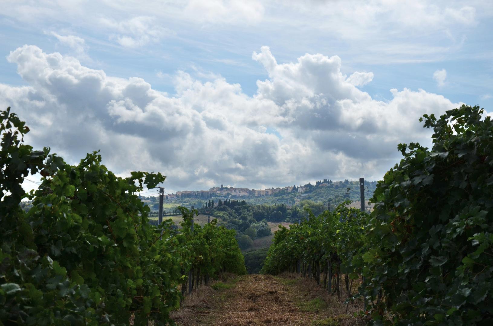Blick durch die Weinberge auf Gambassi