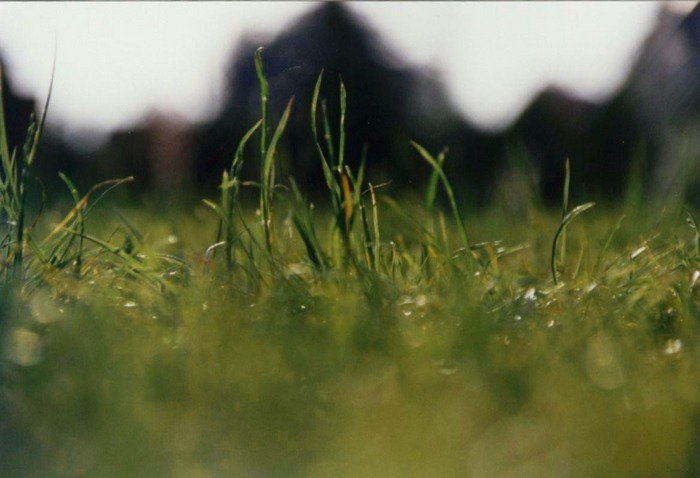Blick einer Ameise