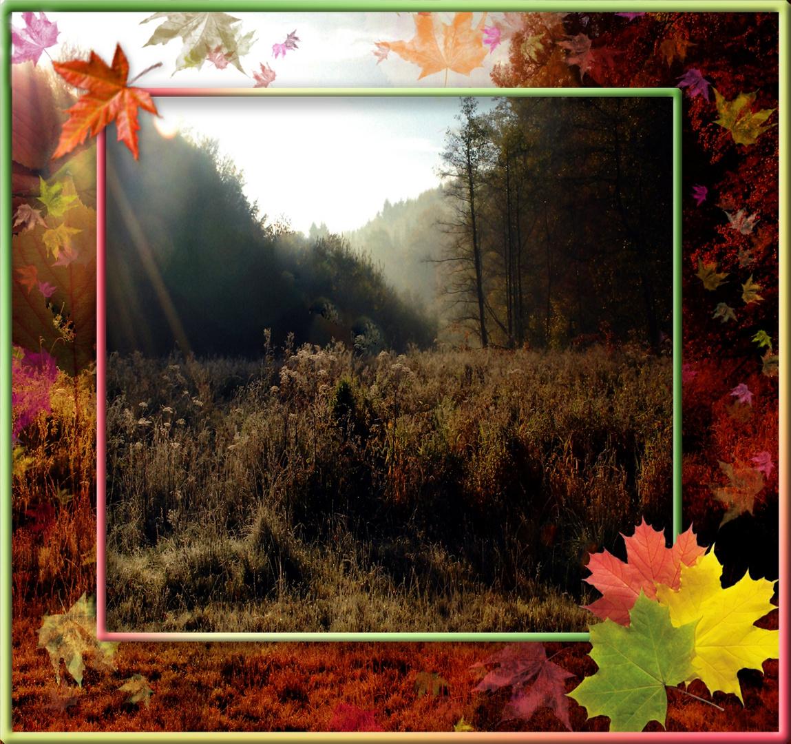 Blick in den Herbst