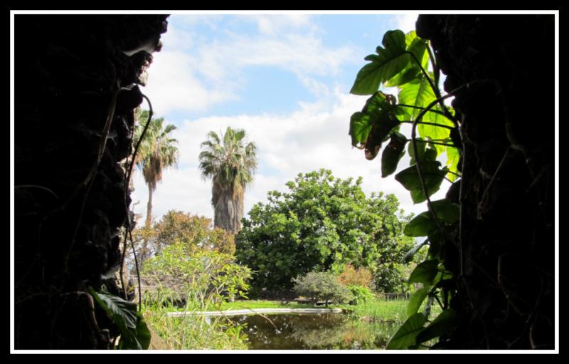 """Blick in den """"Jardin Aquatico"""" in Puerto de la Cruz"""