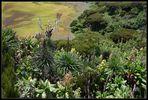 Blick in den Krater des Mt. Gahinga Vulkans, Uganda