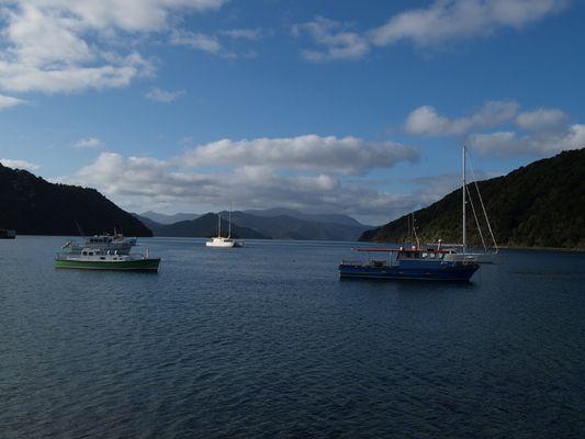 Blick in den Marlborough Sound vom Hafen in Picton