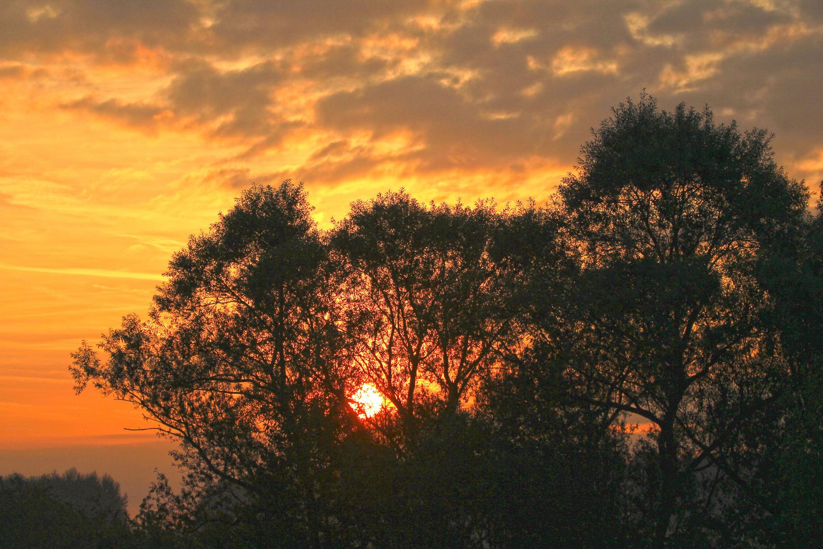 Blick in den Morgen