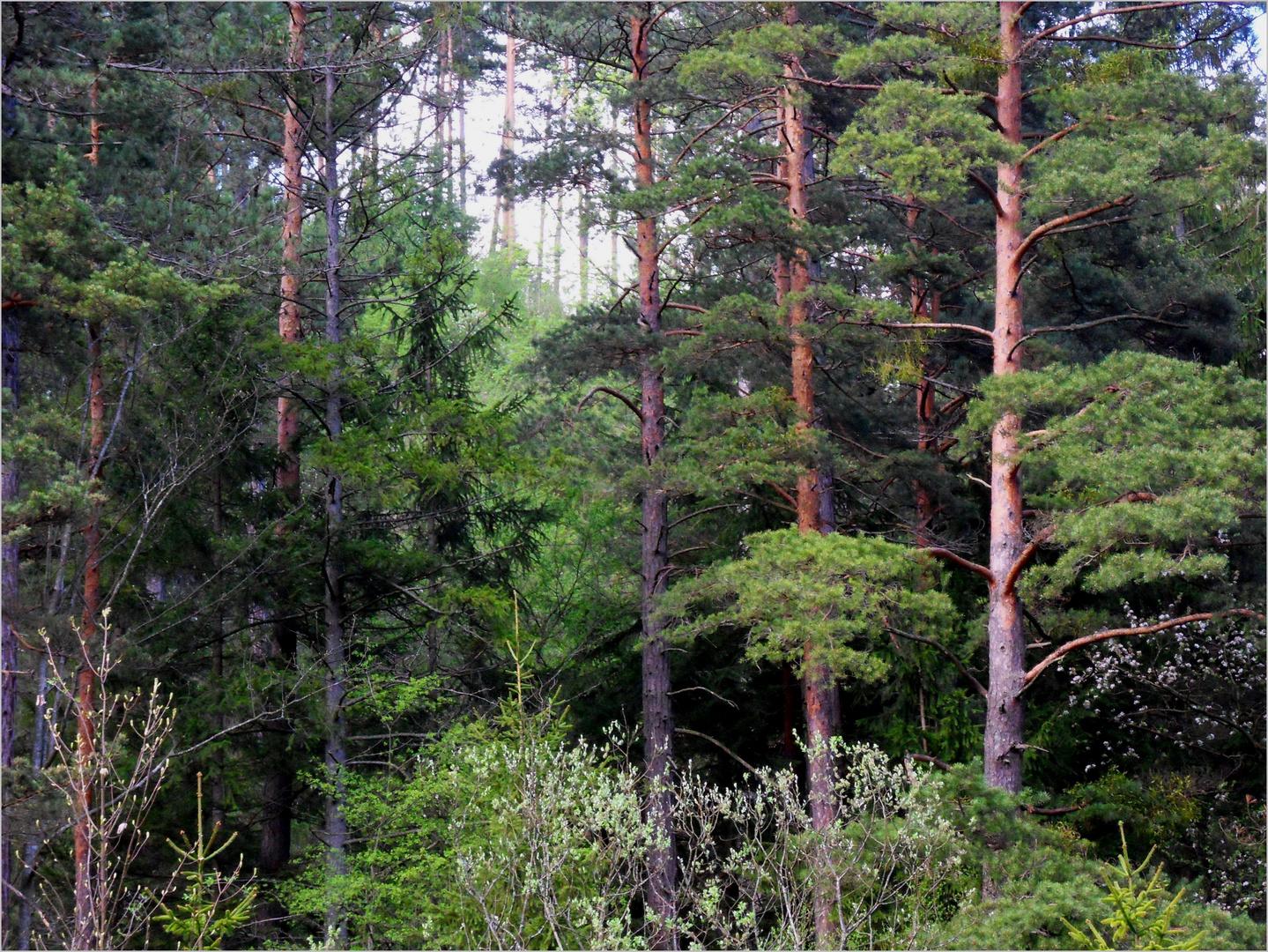 Blick in den Wald hinauf