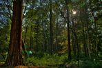 Blick in den Wald - presented in HDR