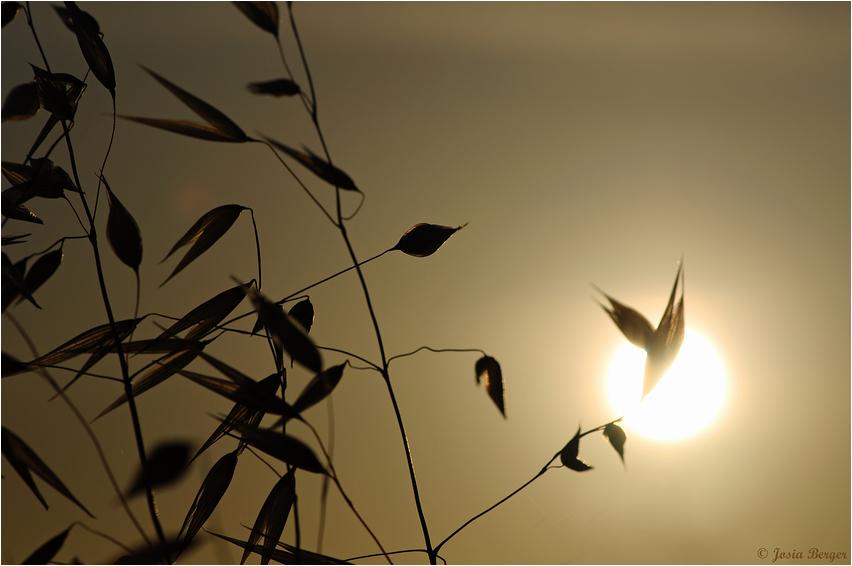 Blick in die aufgehende Sonne (Sardinien Sommer 09)