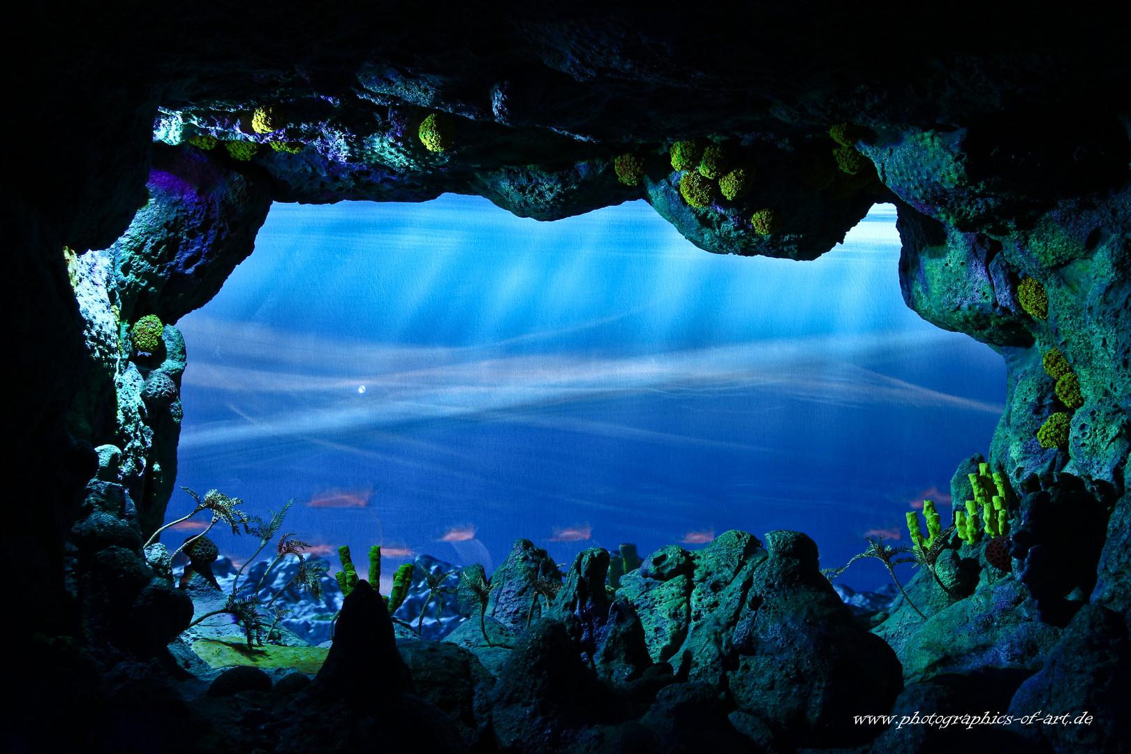 Blick in die Unterwasserwelt