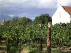 Blick in die Weinberge vom berühmten Portweinhouse