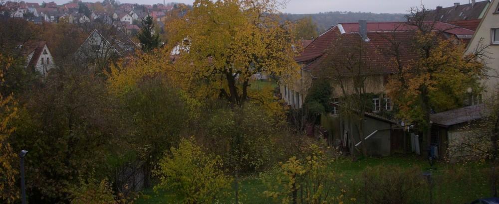 Blick in Nachbars wilden Garten