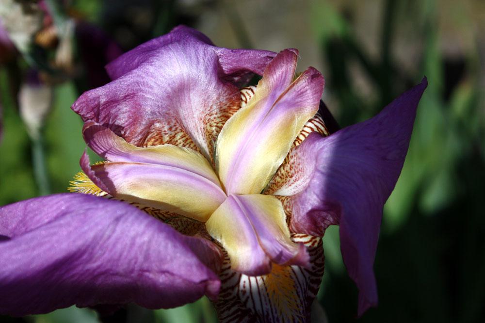 Blick ins Innenlebenden Blüte