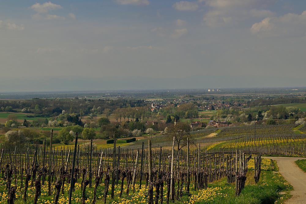 Blick ins Rheintal - Elsass - Vogesen