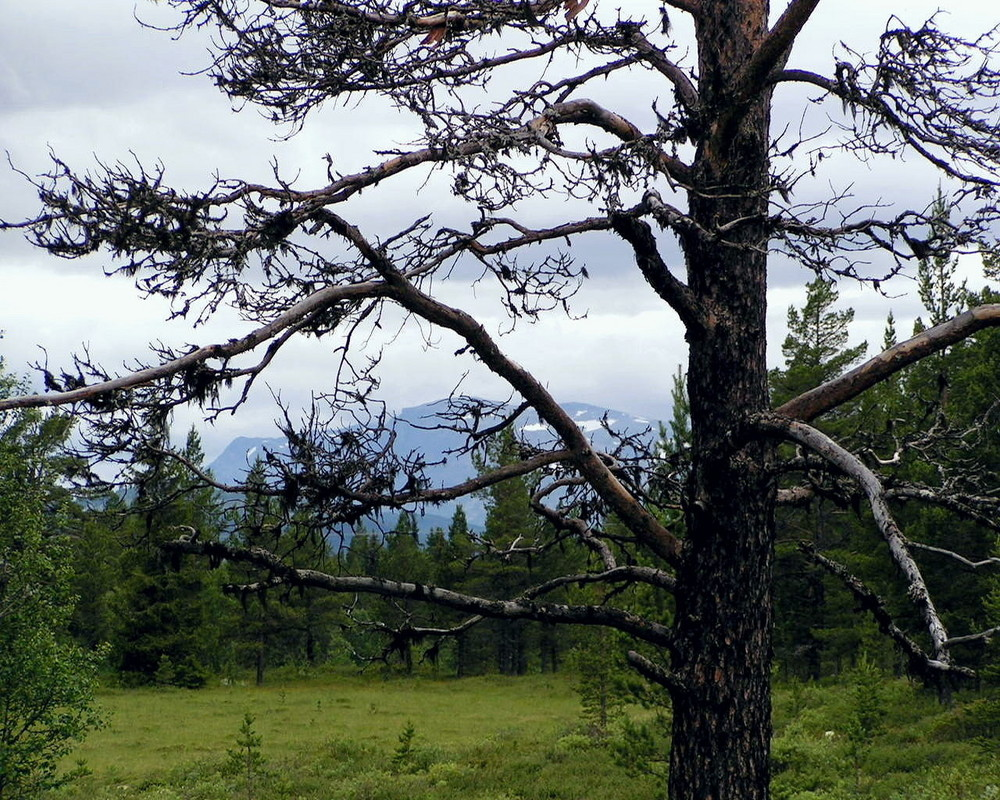 Blick nach Jotunheimen/N 1
