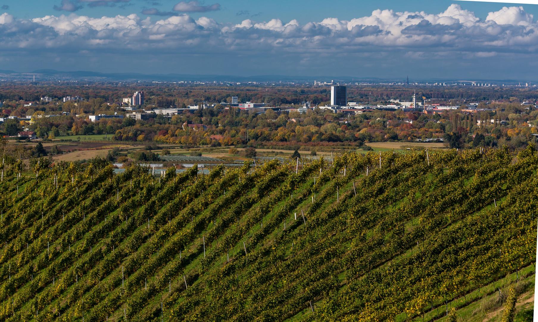 Blick nach Offenburg