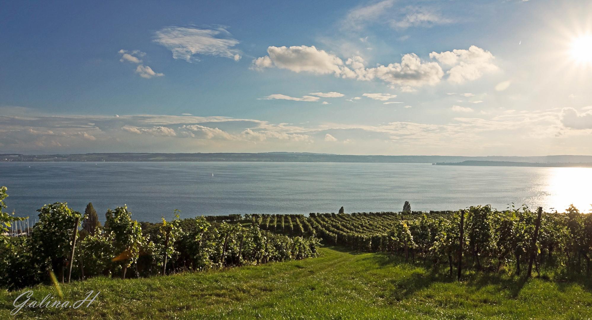 Blick über Bodensee