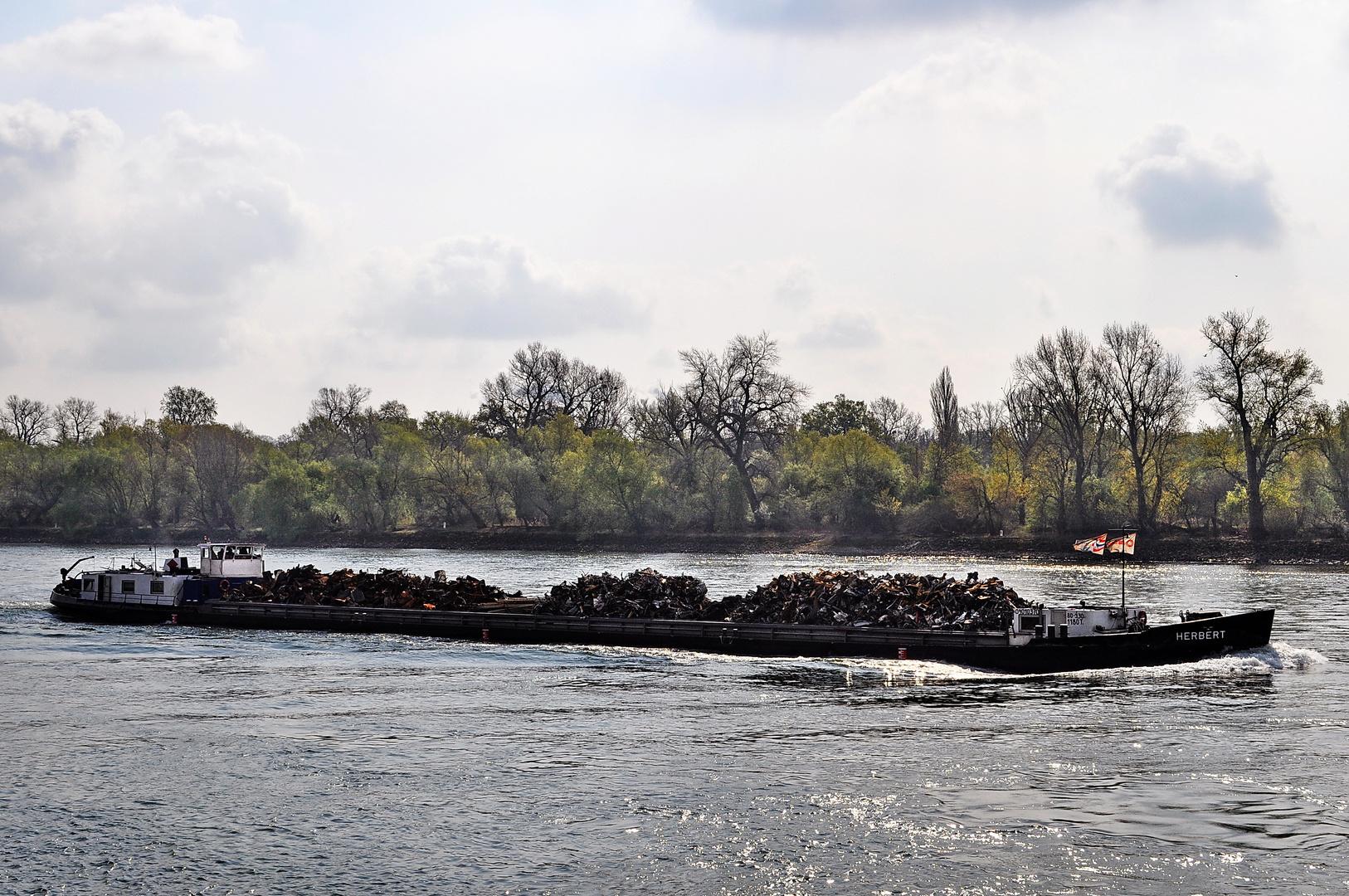 Blick über den Rhein I