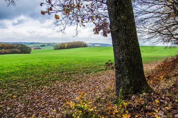 Blick über den Stennweiler Flur (Saarland)