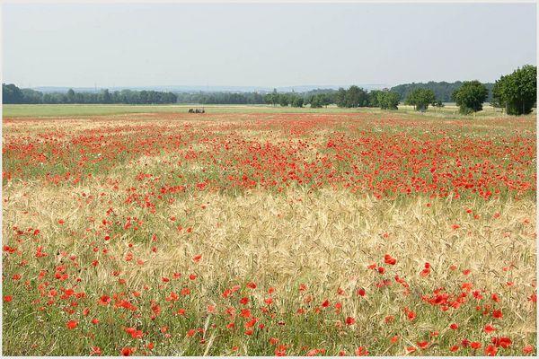 Blick über die Felder auf Schwebheim, Lkr. Schweinfurt