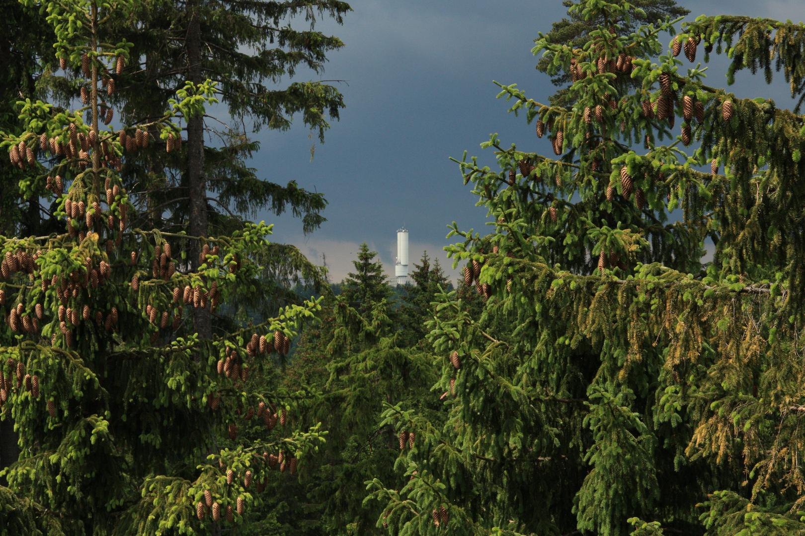 Blick vom Dürrenstein auf den Großen Kornberg