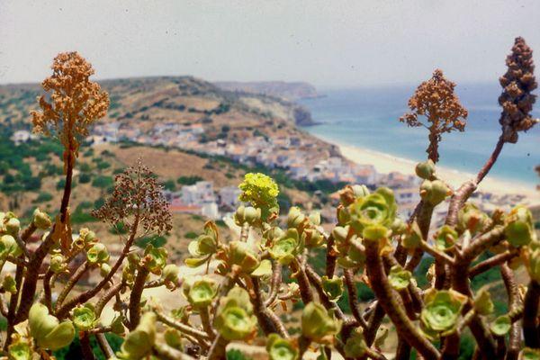 Blick vom Estalagem Infante do Mar auf Salema