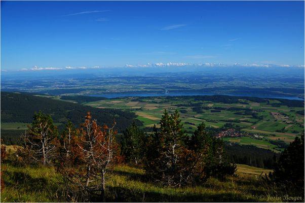 Blick vom Jura in Richtung Berneralpen