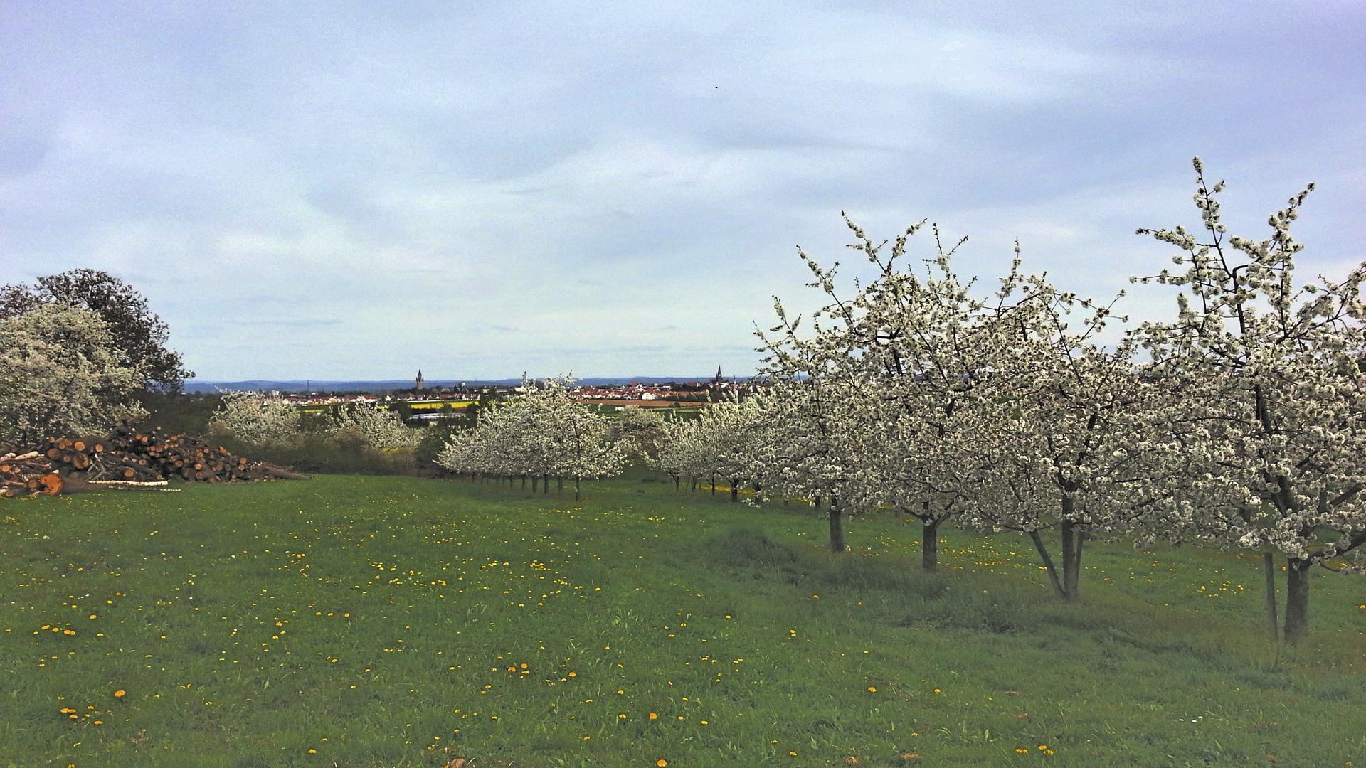 Blick vom Kirschenberg