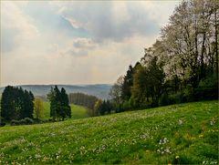 Blick vom Wuppertaler Ehrenberg auf das kleine Tal im Heusiepen.