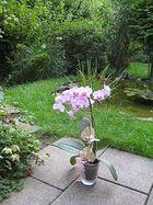 Blick von der Terrasse in einen schönen Garten,