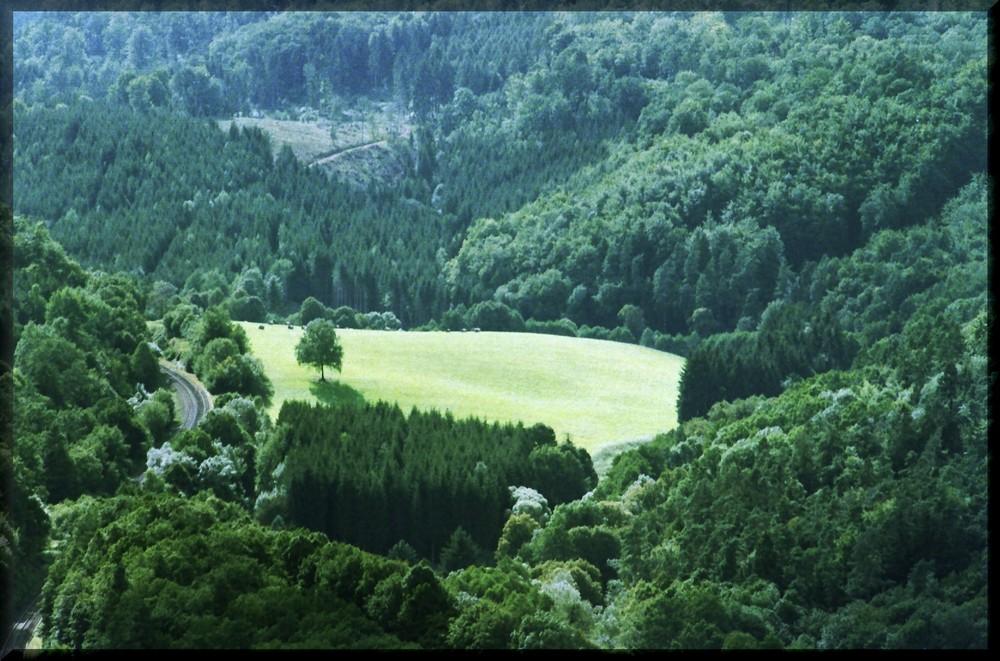 Blick von der Wartburg in den Thüringer Wald